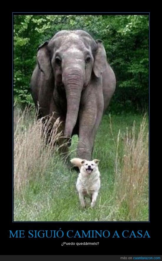 casa,elefante,perro