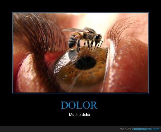 abeja,dolor,ojo
