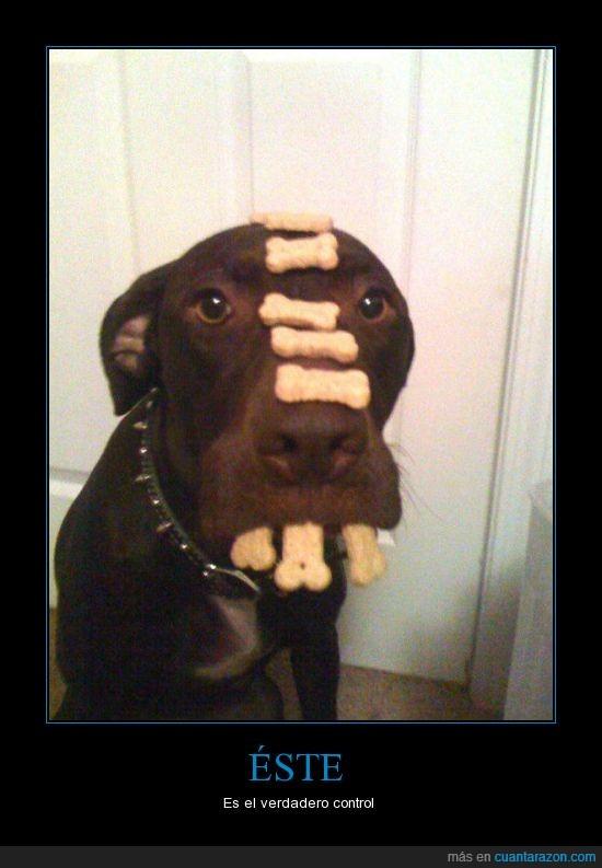 control,galletas,perro