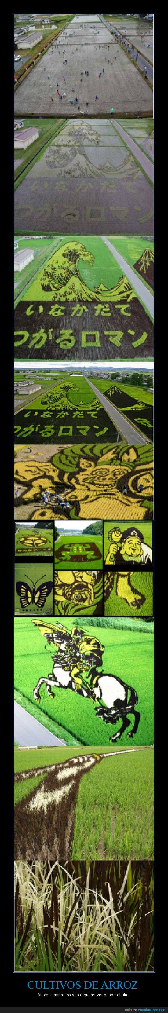 arroz,Arte,china,cultivo,dibujos