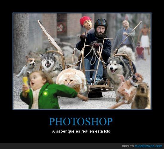 gato volador,Leonardo DiCaprio,Memes,mix,niña de las burbujas,perros,photoshop