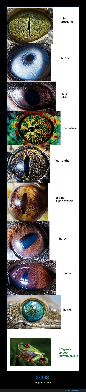 caballo,iris,ojo,pupila,rana