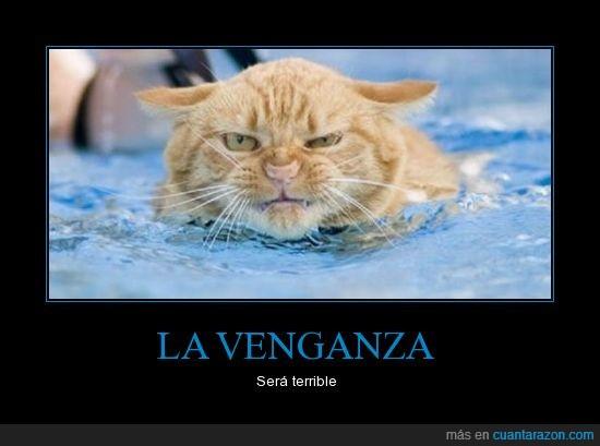 enojado,gato,mojado,venganza
