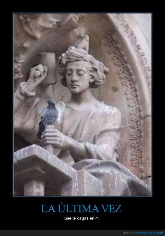 cagar,estatua,paloma