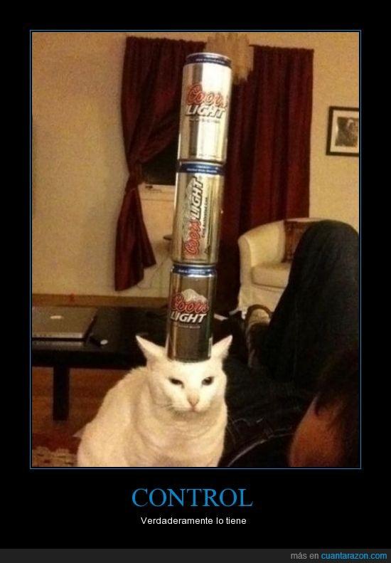 cabeza,cerveza,equilibrio,gato,latas