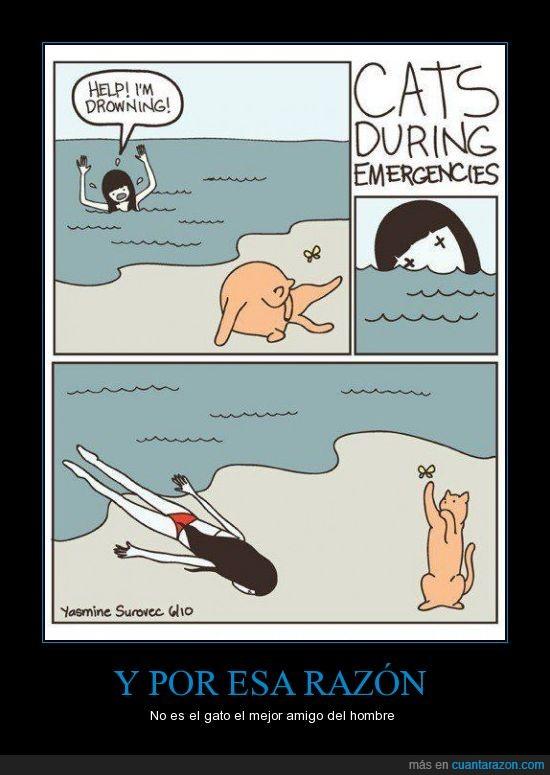 ahogar,amigo,gato,mar