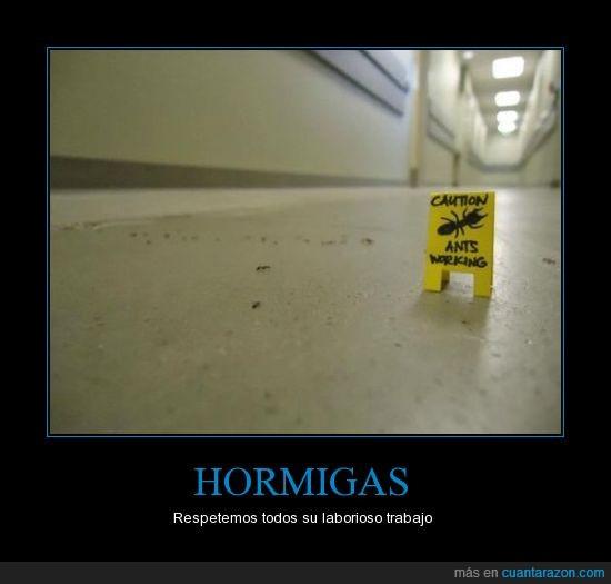 caution,cuidado,hormigas,señal,trabajo