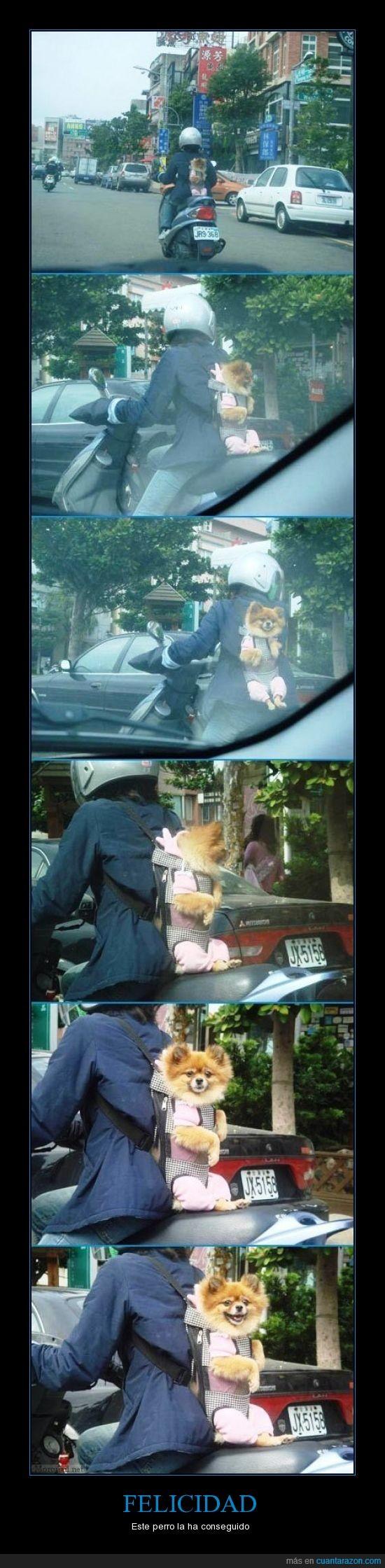 espalda,feliz,mochila,moto,perro