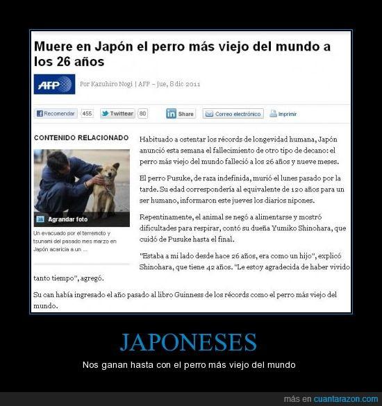asia,japón,japoneses,mundo,perro,viejo