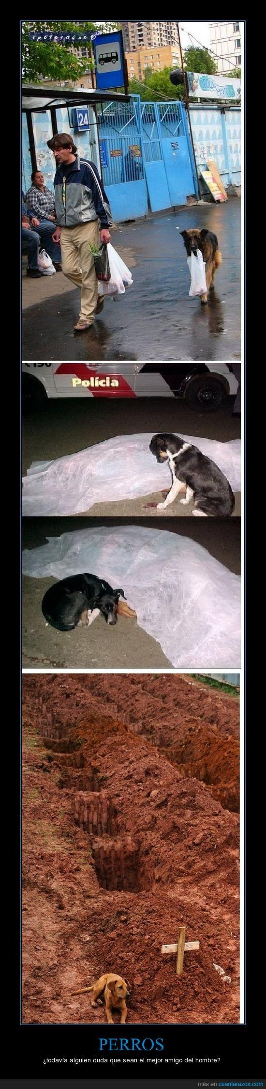 amistad,perro