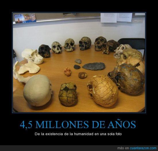 australophitecus,cráneos,etc,homo habilis,homo sapiens,neanderthal,pasado