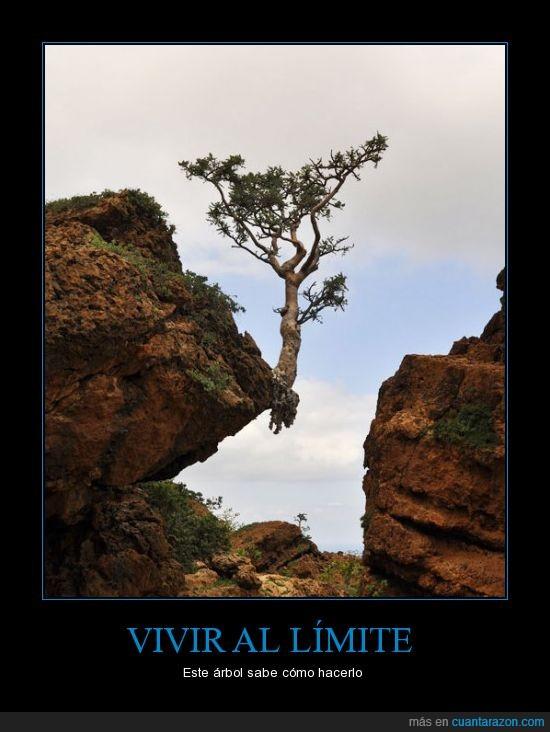 árbol,vivir al limite