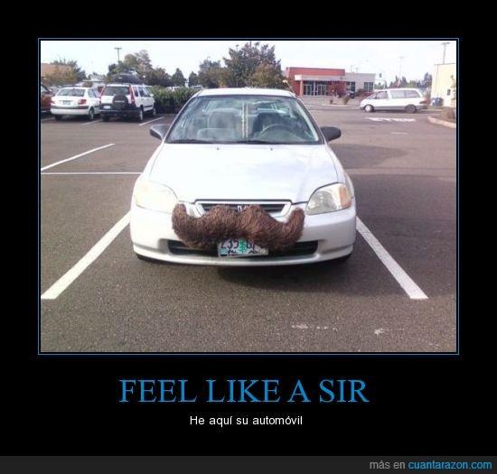 auto,bigote,coche,feel like a sir