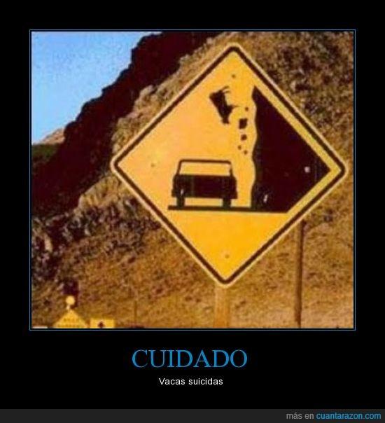 carretera,Cuidado,señal,tráfico,Vacas
