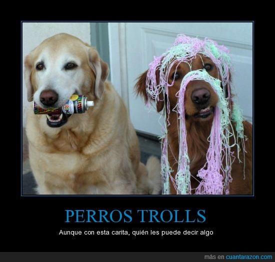 cabron,confetti,perro,troll