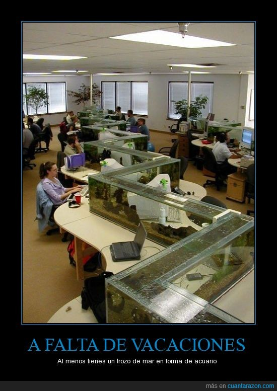 acuario,anti estrés,nivel,oficina