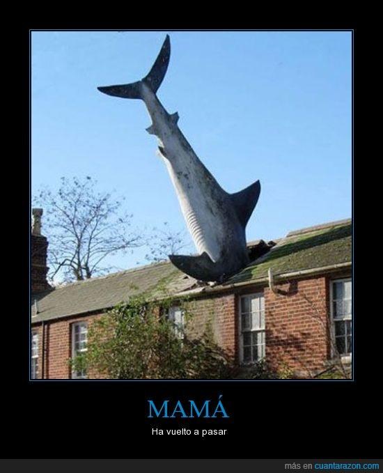 casa,ha vuelto a pasar,mama,pez,tiburón
