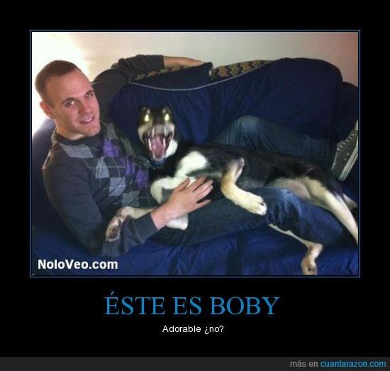 boby,foto,perro,satanico