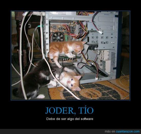 arreglar,gatos,ordenador,problemas,reparación,técnico
