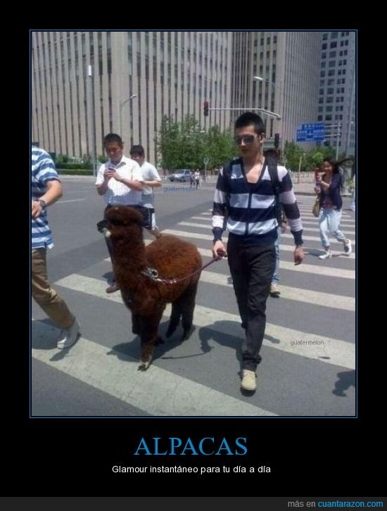 alpaca,calle,chico,pasear,perro