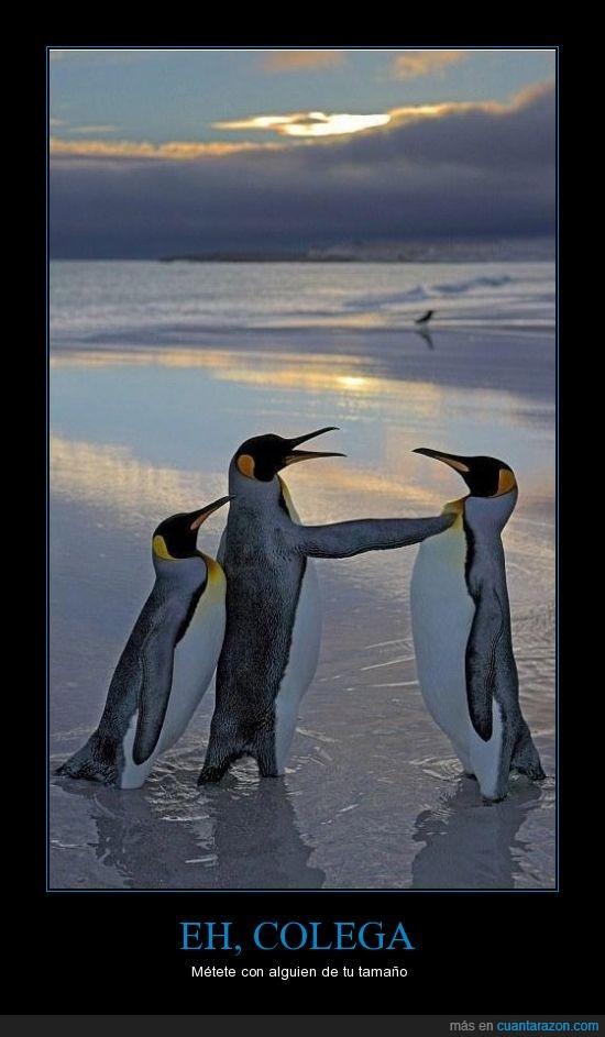 colega,pinguinos,tamaño