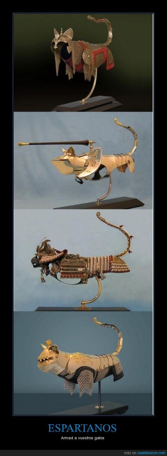 armadura,esparta,gatos