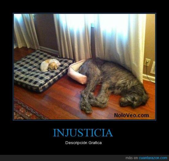 cama,casa,colchón,dormir,grande,injusticia,pequeño,perros