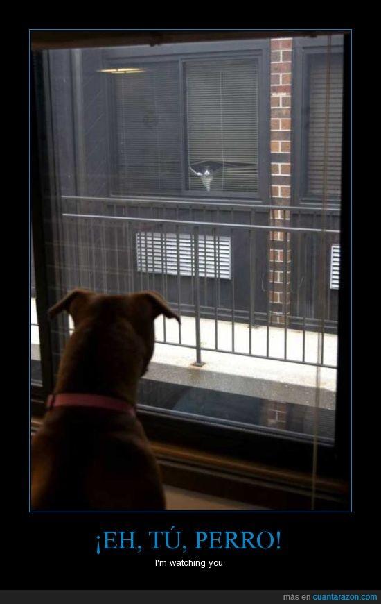 gato,i'm watching you,miedo,ninja,peligro,perro,ventana,vigilar
