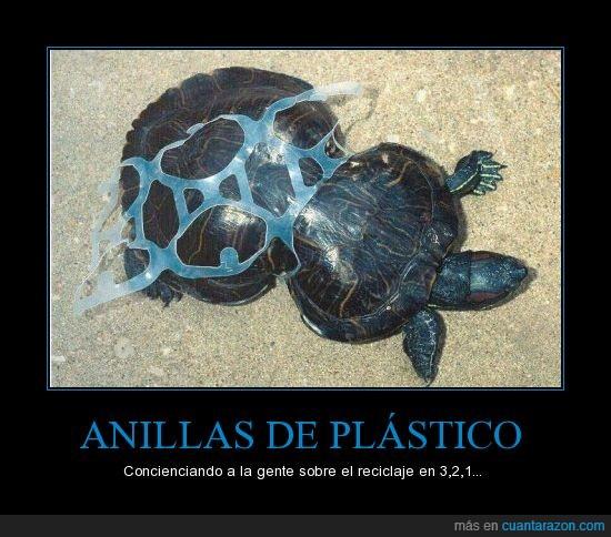 anillas,basura,deformar,ecologia,plástico,tortuga