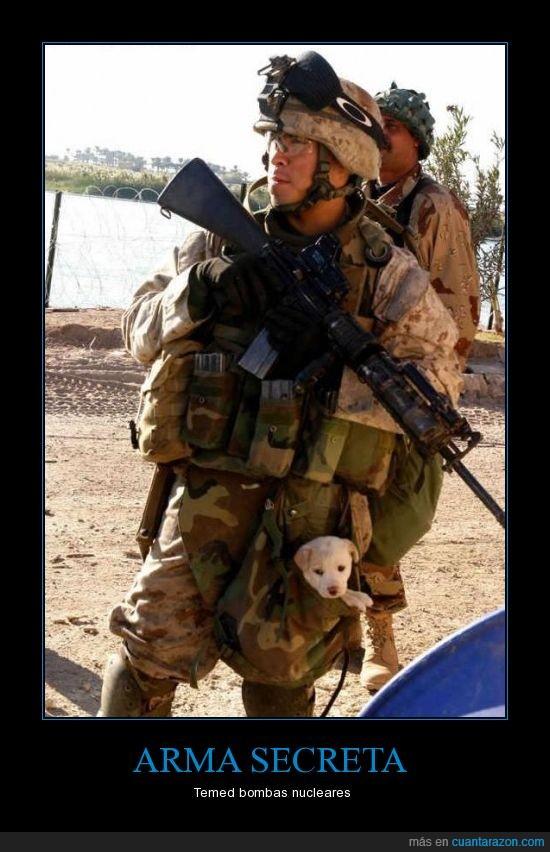 armas,bombas,cachorros,iraq,nucleares,pequeños,perros,soldado