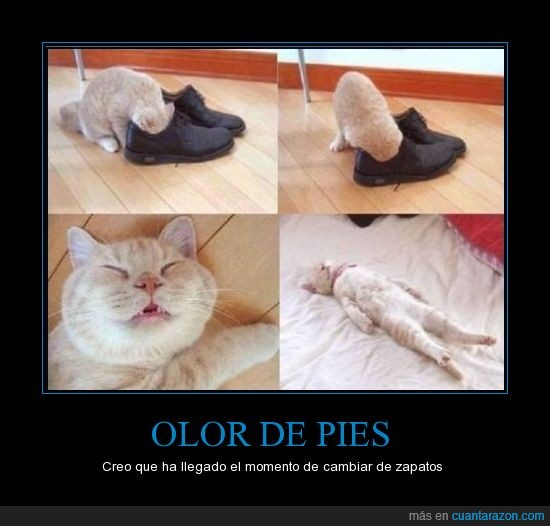 gato,intoxicacion,muerte,pies,zapatos