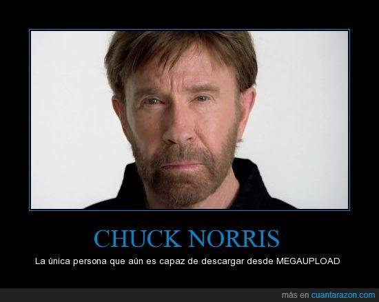 chuck norris,descargar,megaupload