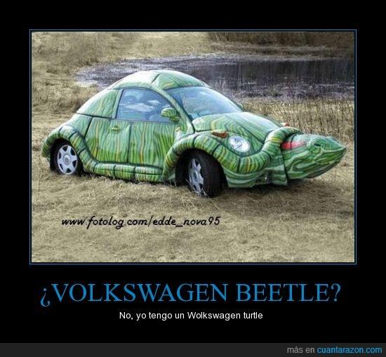 coche,tortuga,volkswagen beetle