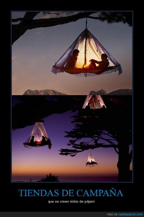 acampada,campo,luz,nido,tienda