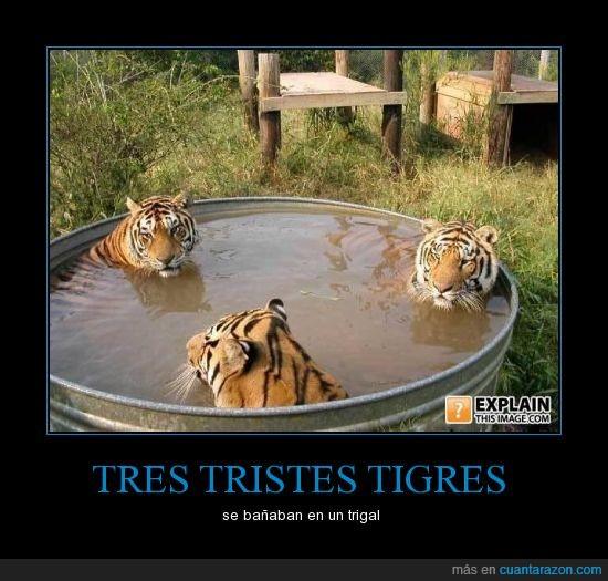 bañera,baño,refran,tigre