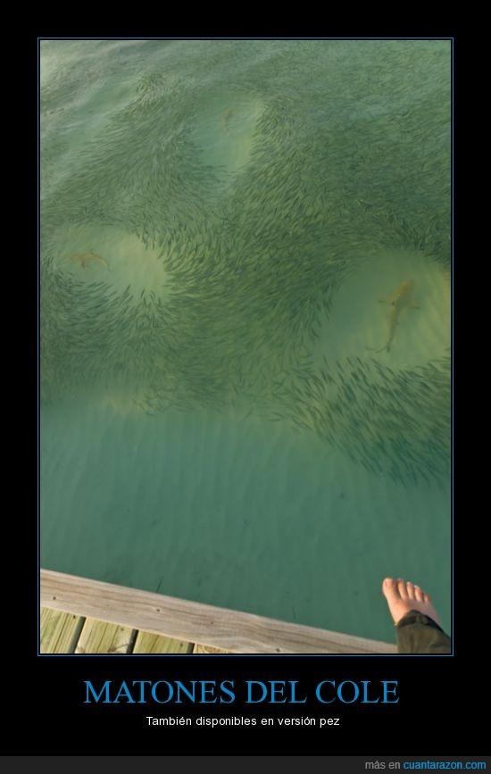 miedo,peces,rodear,tiburones