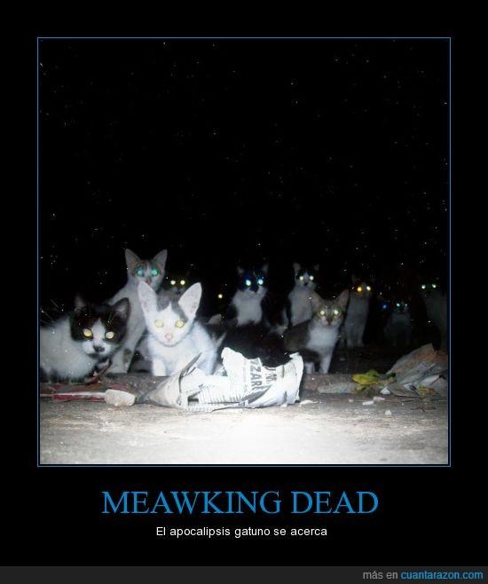 apocalipsis,brillantes,gatos,ojos