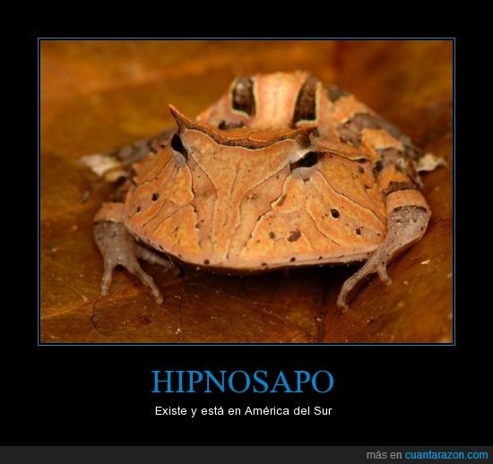 america,america del sur,animal,futurama,hipnosapo