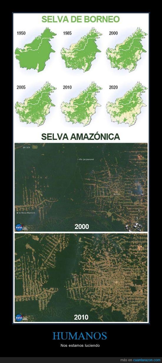 amazonas,borneo,deforestación,planeta,selva,ser humano,tierra