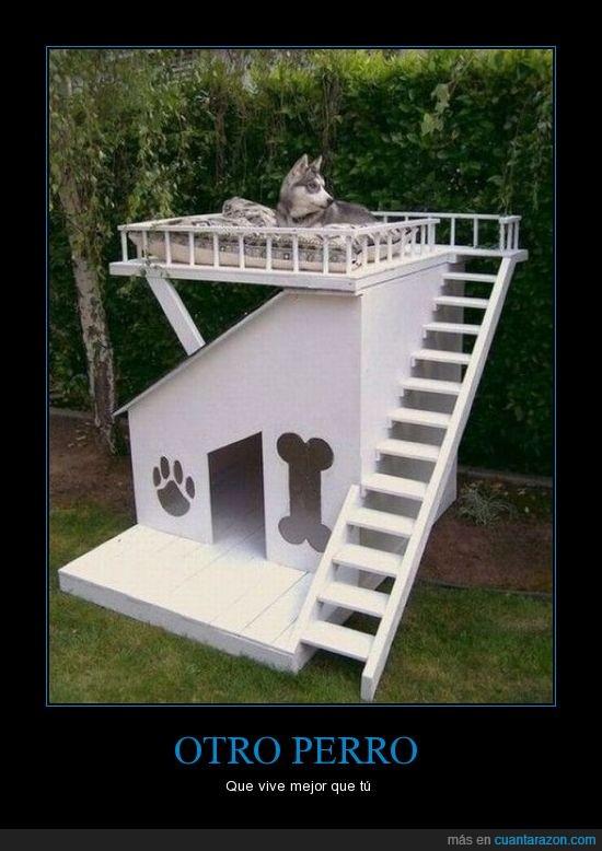 casa,caseta,perro,vivir