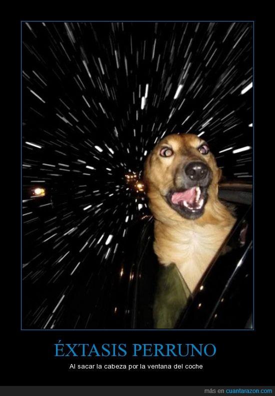 asomar,cabeza,coche,colorines,flipa,perro,sacar,velocidad,ventanilla,viento