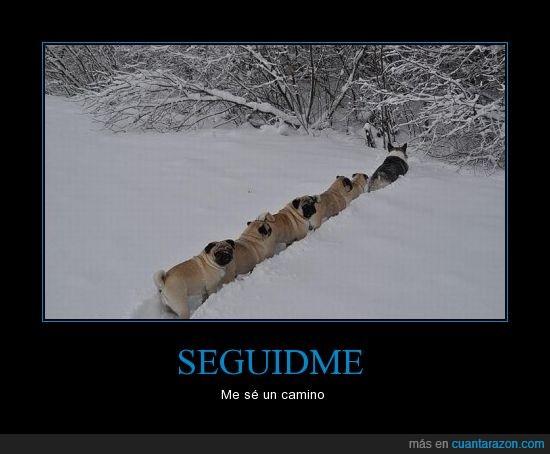 atajo,camino,carlino,nieve,perros,pug