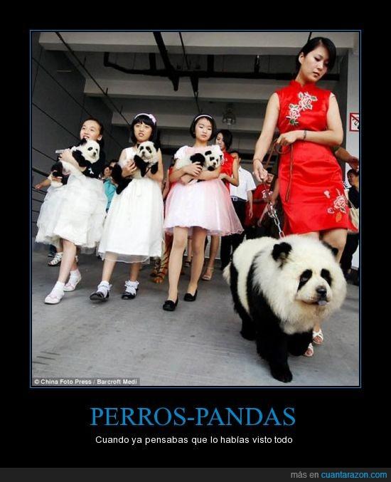 china,pandas,perros
