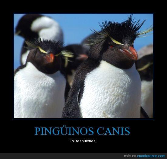 canis,maquillaje,ojos,peinados,pingüinos