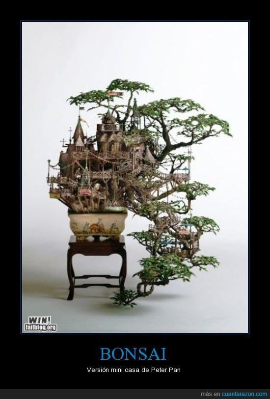 bonsai,casa,pan,pequeño,peter