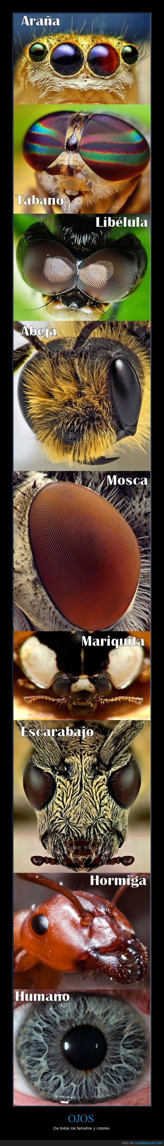 animales,insectos,lupa,naturaleza,ojos