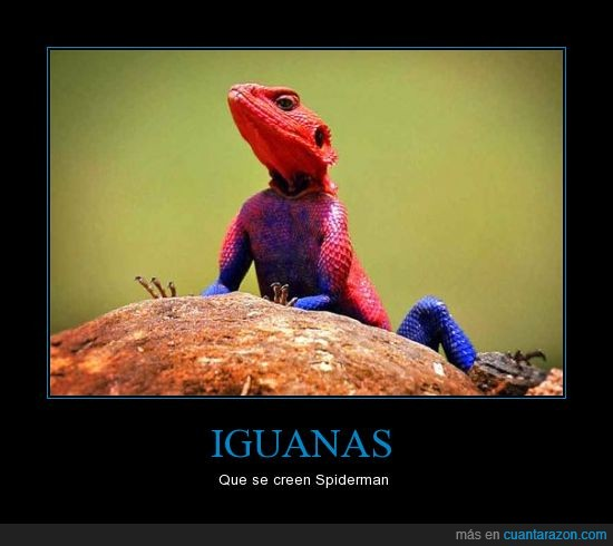 Iguana,Spiderman