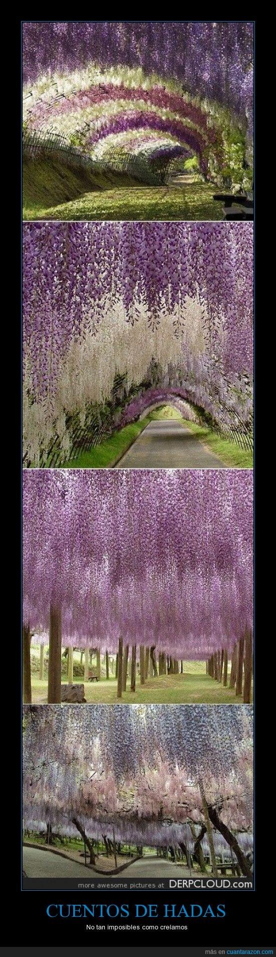 flores,Japón,jardín de flores