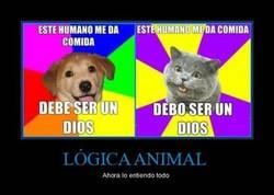 Enlace a LÓGICA ANIMAL