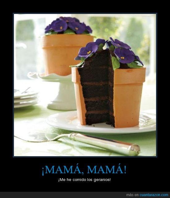 chocolate,comer,geranio,pastel